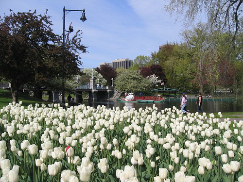 Tulips and SwanBoats