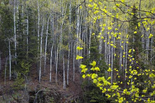 alaska landscapes thunderbirdfalls