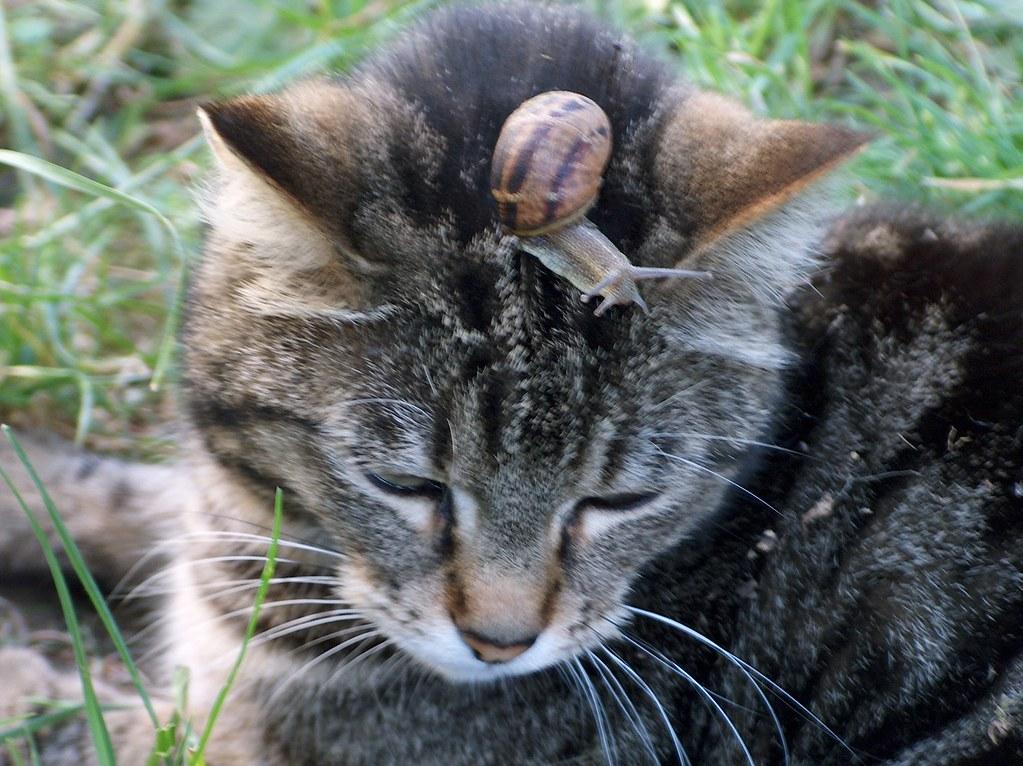 Animal friendship 2