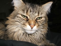 Scowling Cleo?
