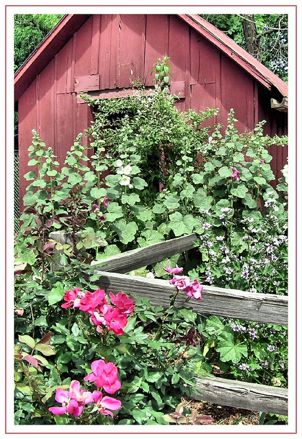 Old fashioned flower garden flickr photo sharing for Classic house with flower garden