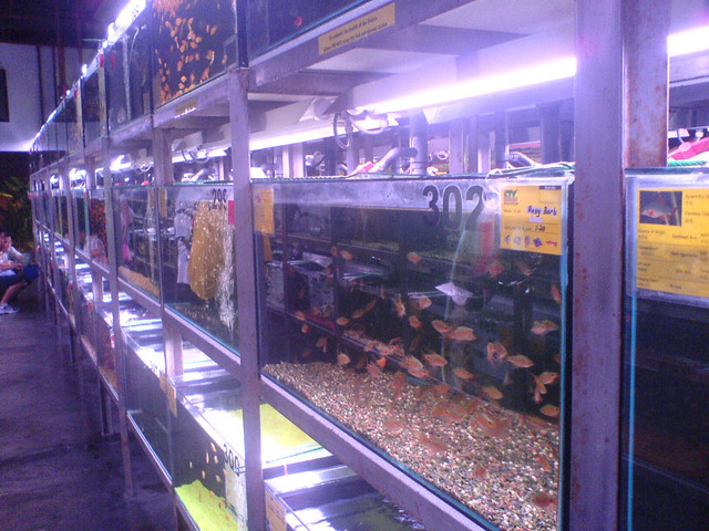 Visiting chew thean yeang aquarium shop m 39 re undefined for Fish farms near me