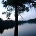 Small photo of Cutoff Tree