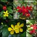 Flowers & Berries by espion