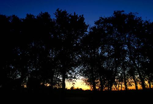 trees sunset silhouette illinois mattoon stephenhaas douglashartnaturecenter october62006