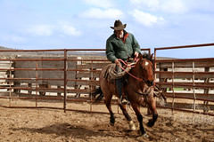 animal sports, rodeo, equestrianism, western riding, equestrian sport, sports, reining, horse, cowboy,