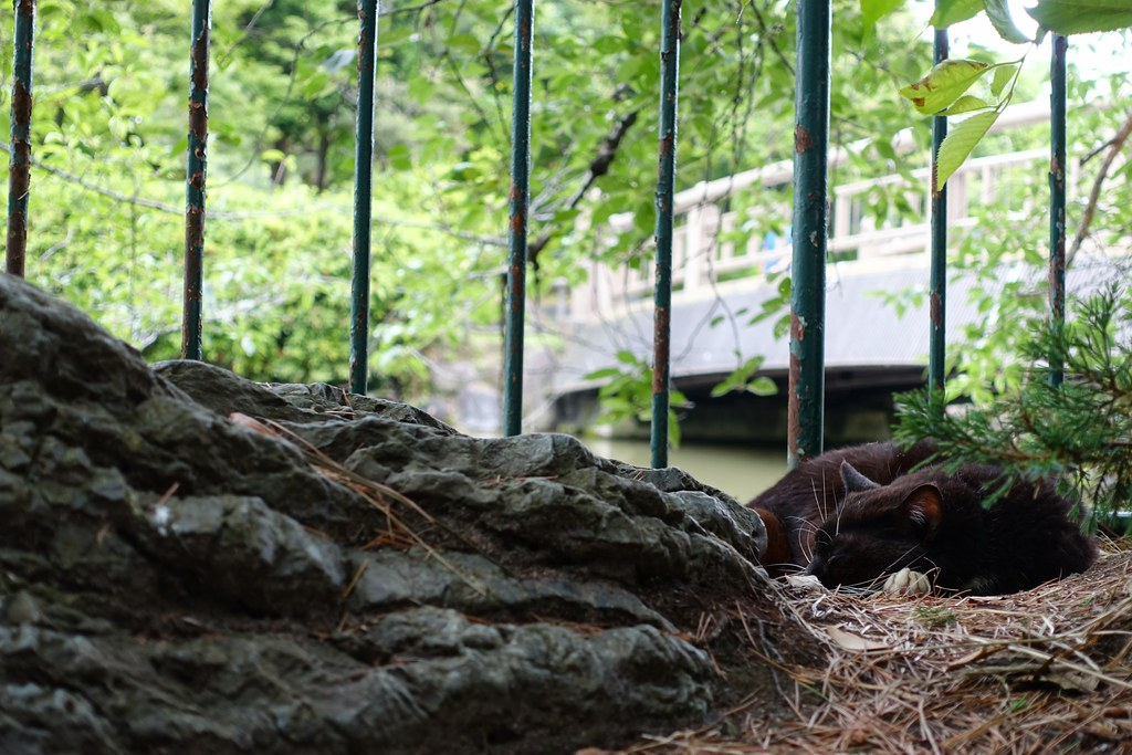 A cat in Mejo park 2015/06 No.1(One scene of commuting 2015/06 No.7).