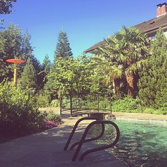 Let's go to #Oregon, she said, it's bound to be cooler there. #summer #poolside #troutdale