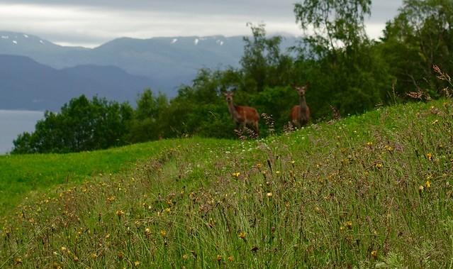 Deer Spotting