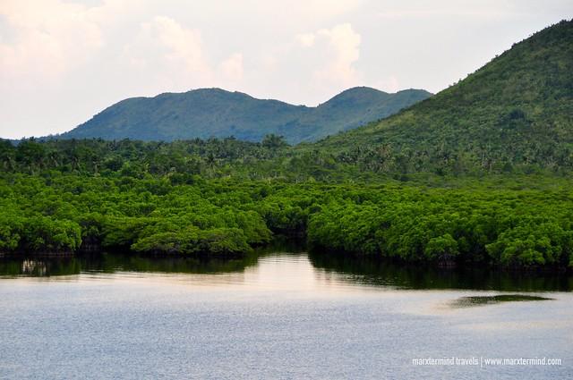 Mangrove Forest La Estancia Busuanga