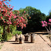 Yard Alamos, Sonora  3492pr by MReents