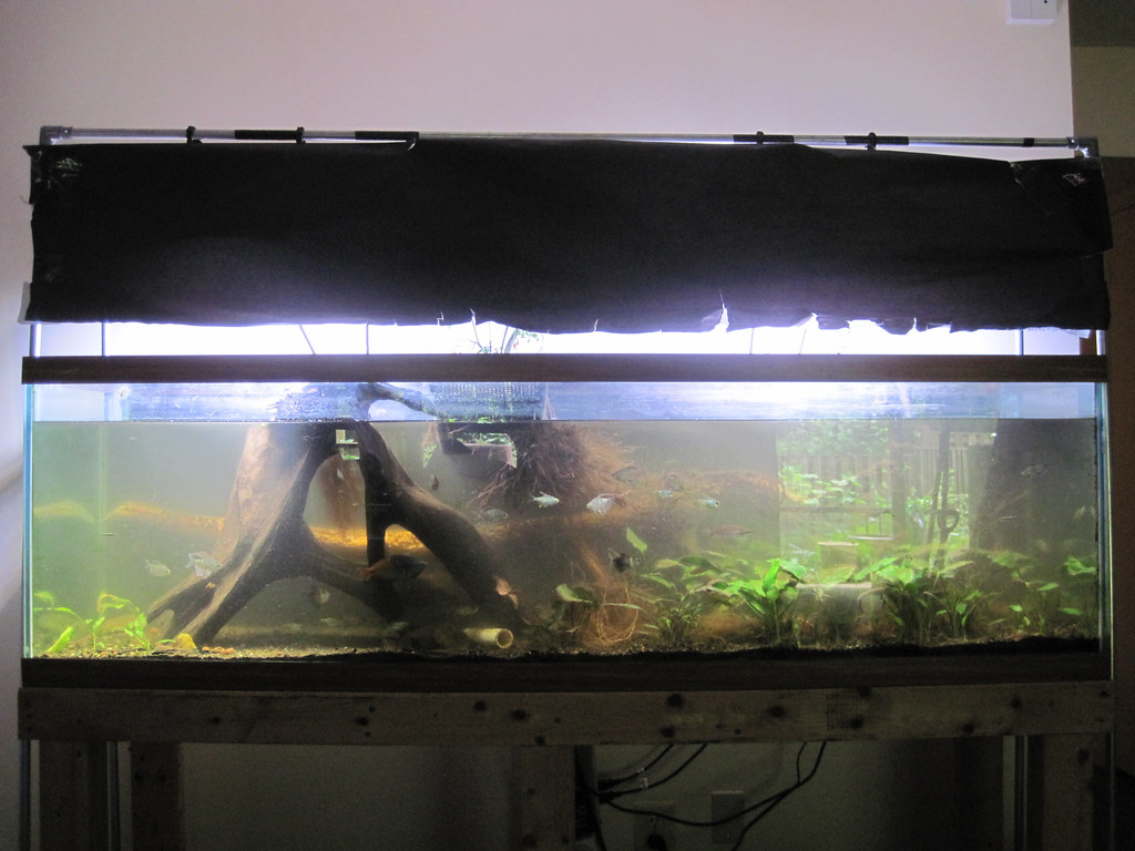 landscape of a large aquarium with wood stumps, plants, and tropical fish