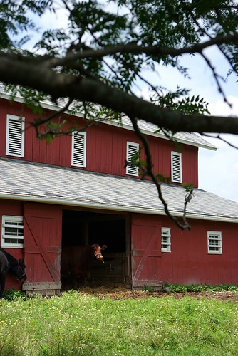 barn yard at slate run farm