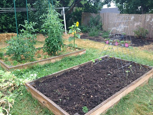 The former peas and onions bed, now half planted in cucumbers.