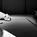 dog & dog by John √