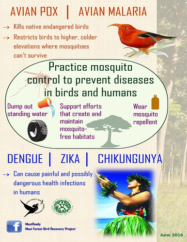 Educational poster about mosquitoes by the State of Hawai'i Department of Health.
