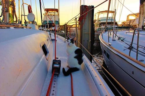 The boat Cat Moo