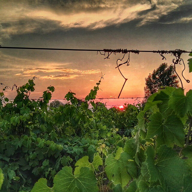 Un weekend nelle terre del Lambrusco Reggiano