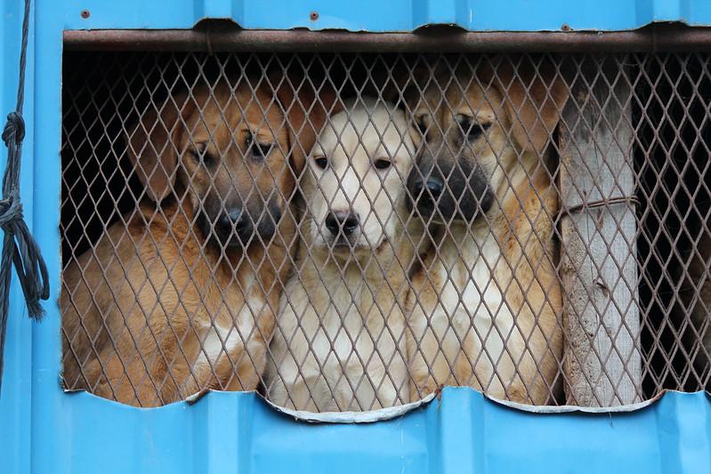 Dog Farm 2, Busan, Korea 2014