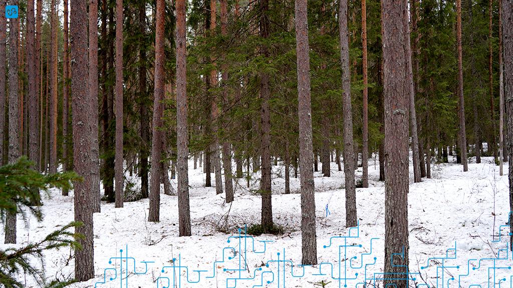 Floresta em Vindeln