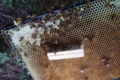 queen installed IMG_3075
