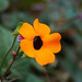Flor por heldraug