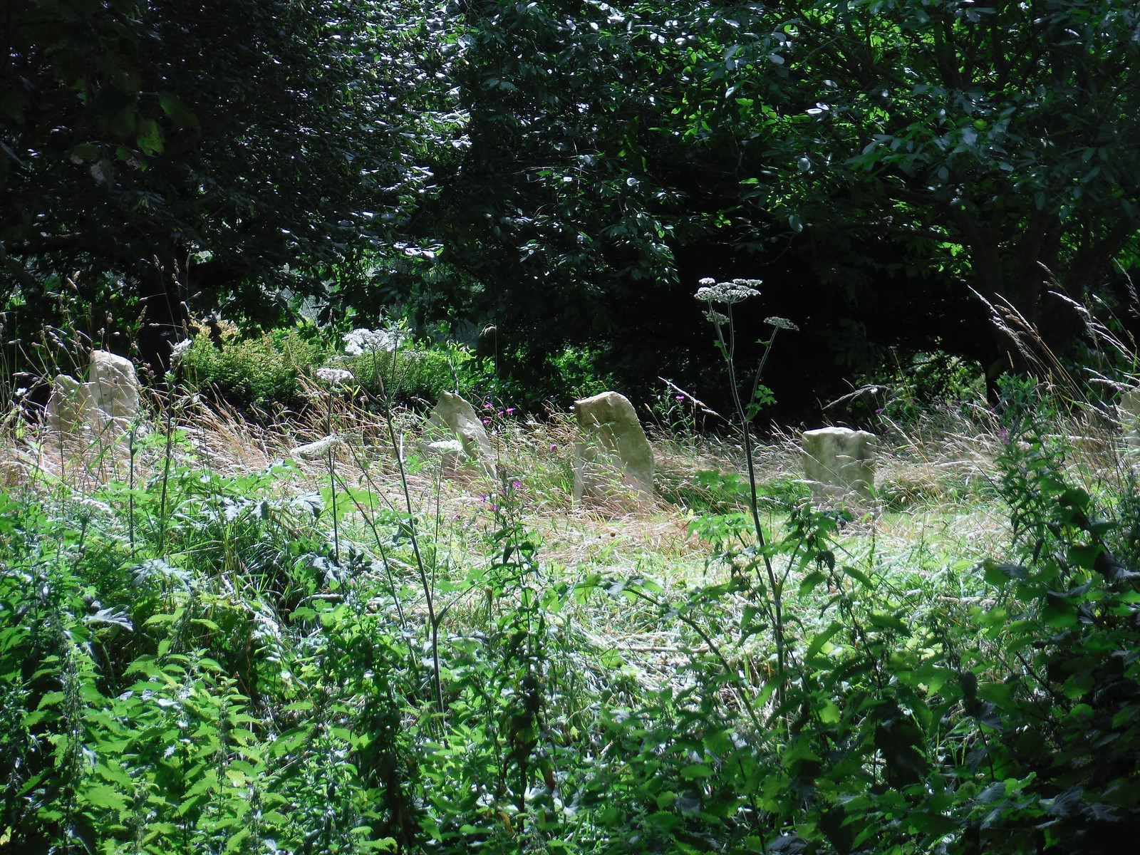 Standing Stone Circle amidst high grass, Donhead St. Andrew SWC Walk 252 Tisbury Circular via Donhead St. Andrew