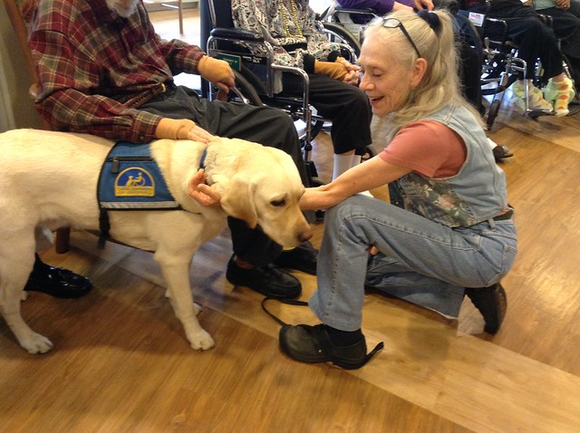 Service dog can pull off socks