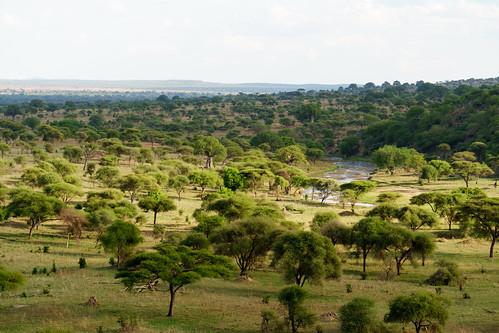 sony safari tarangire sel18200 a6300 manyararegion tanzania tz