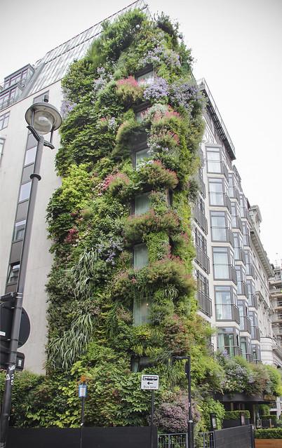 Athenaeum Hotel - Vertical Garden