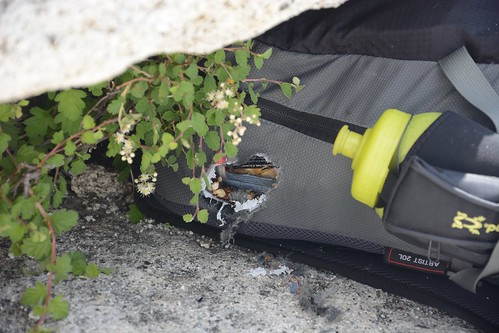 Backpack with Chewed Hole