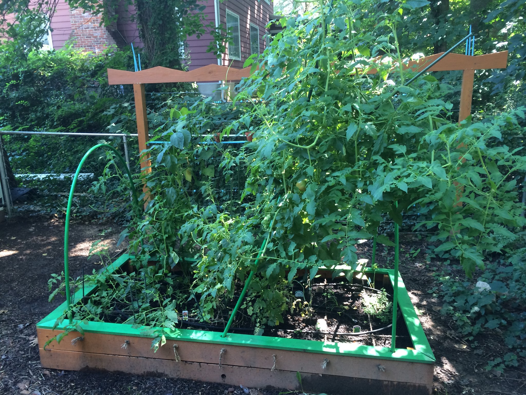 Veggies July 2015