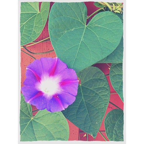 August 5 - Something purple