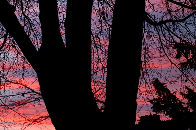 Same tree lower down different dawn