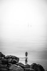 01-09-2016 Boats, Heron and Fog-3