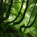 Baso dantzaria (Dancing forest) by Iker Aizkorbe