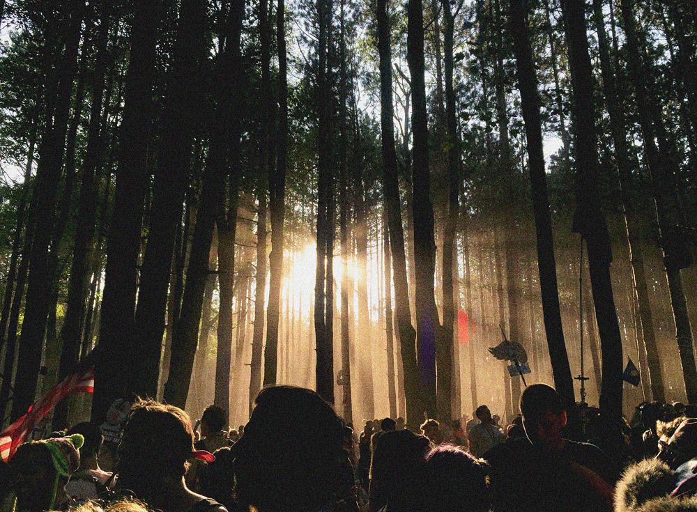 EF_Sherwood-Forest