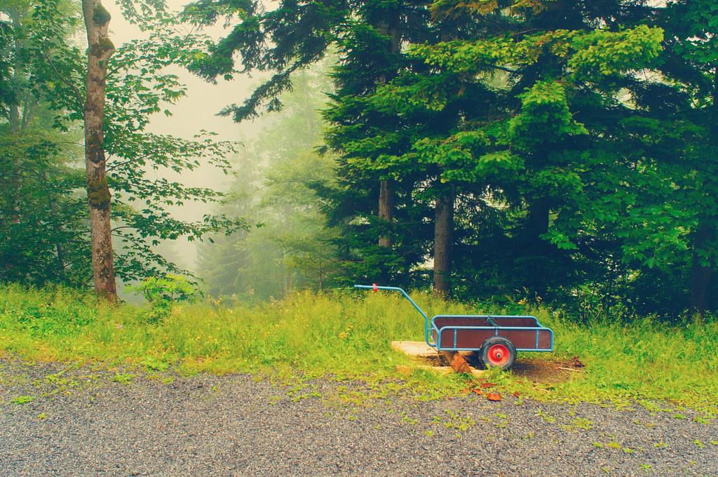 Rainy and Misty day