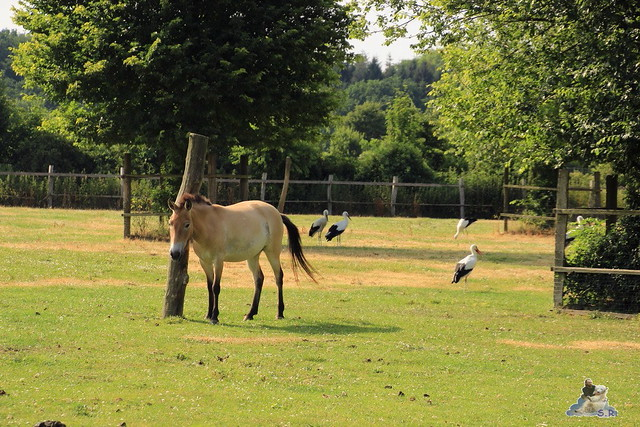 Tierpark Krüzen 03.07.2015  80