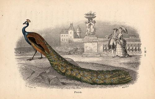 013- Alphabet illustré des oiseaux- 1885- MM. Travies-BNF