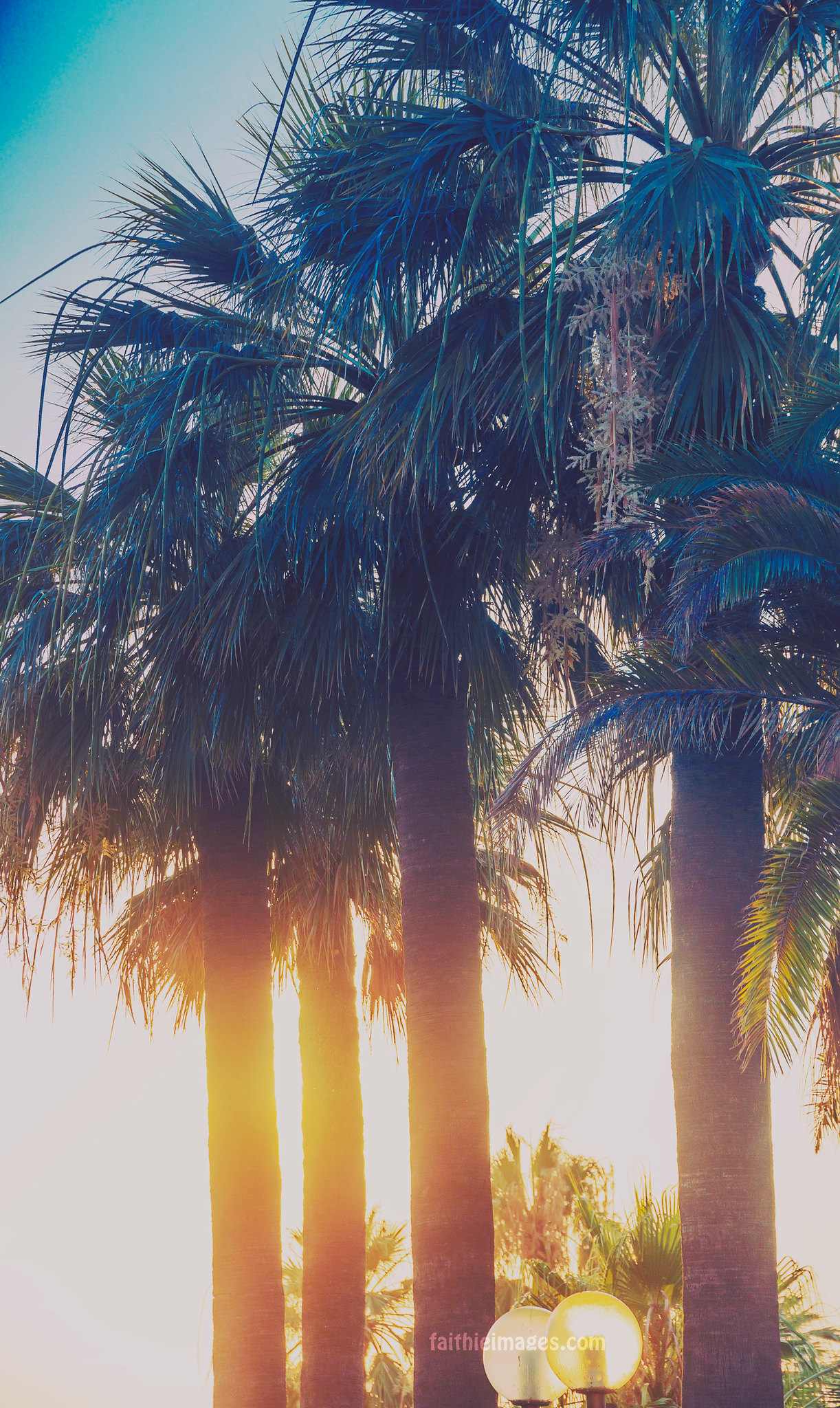 Sun shining among palm trees in Cannes