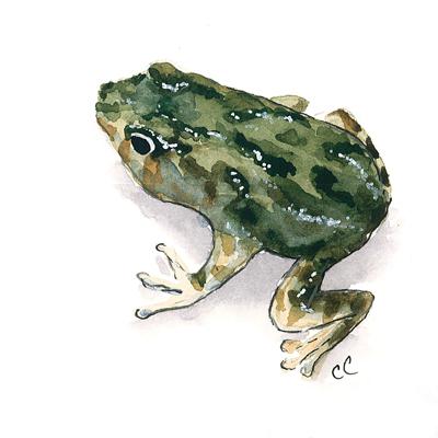 20150809_tree_frog_web