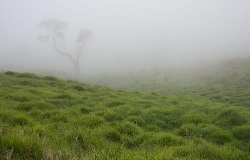 hakalau fog
