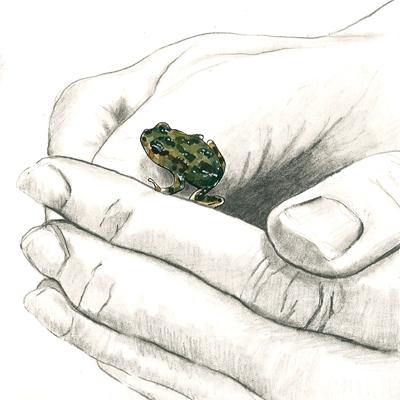 20150809_tree_frog_hand_web