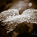 Y la lluvia cayó sobre la parra by silvina-Bordon