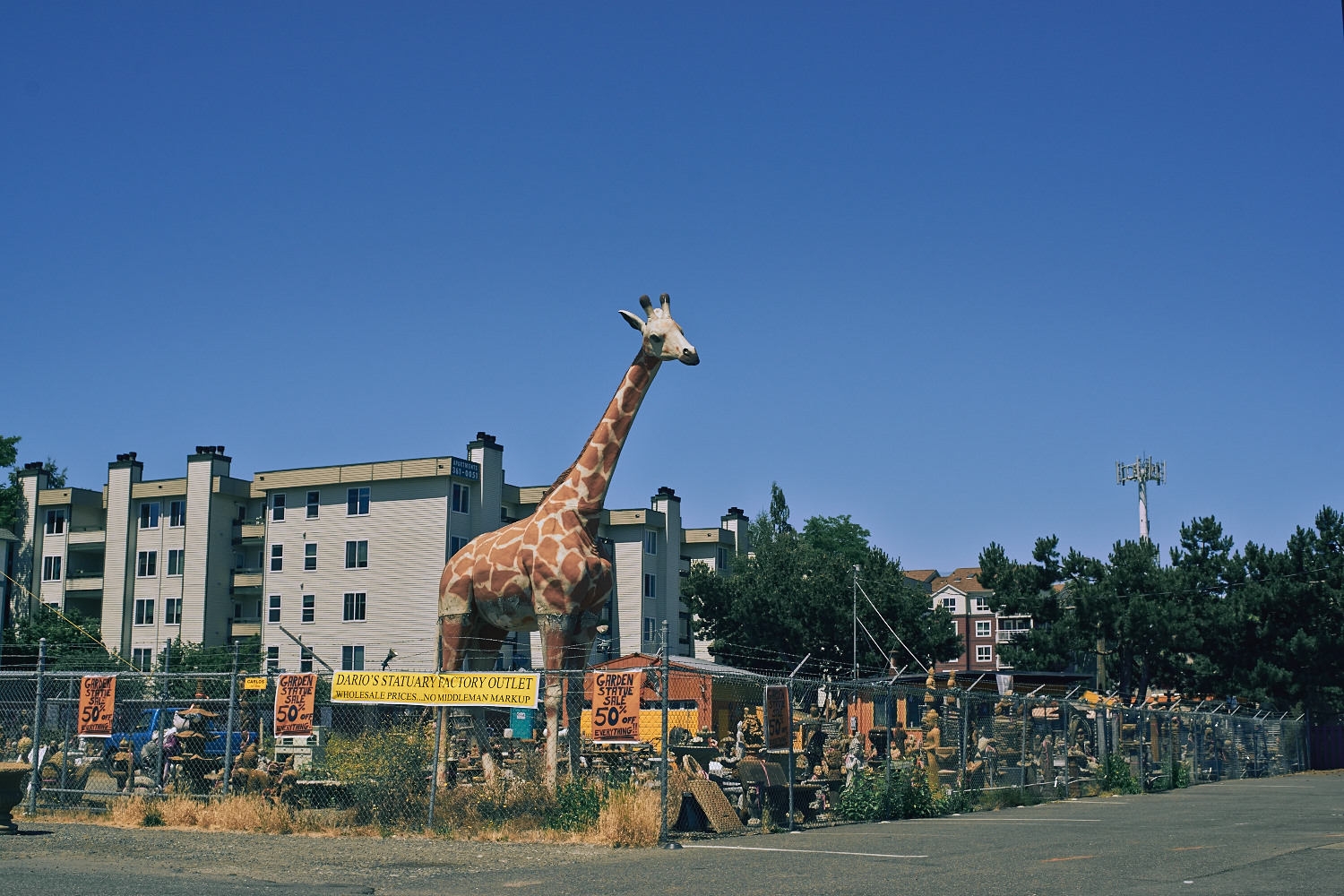 Honey! guess what I got for our backyard?... A Giraffes!!!!! WHY? because it's 50% off!!