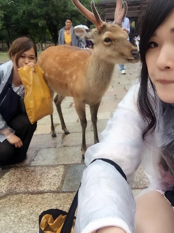 鹿 (28)