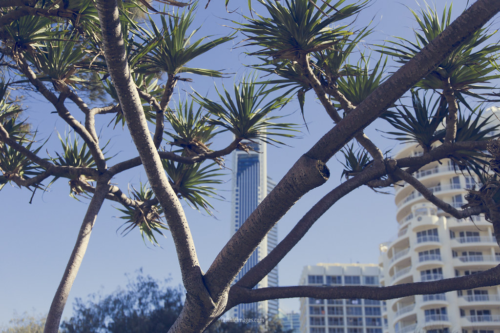the Soul skyscraper in Gold Coast framed by tree branches