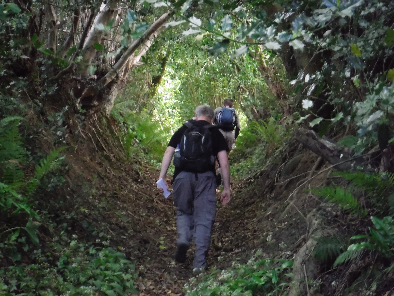 Steep Holloway SWC Walk 249 Tisbury Circular via Dinton and Fovant