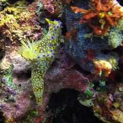 seahorse(0.0), fish(0.0), syngnathiformes(0.0), pomacentridae(0.0), coral reef(1.0), animal(1.0), coral(1.0), organism(1.0), marine biology(1.0), fauna(1.0), freshwater aquarium(1.0), underwater(1.0), reef(1.0),